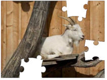 goat jigsaw puzzles