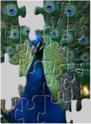 Peacock jigsaw puzzels