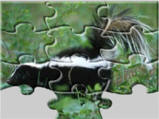 skunk jigsaw puzzle
